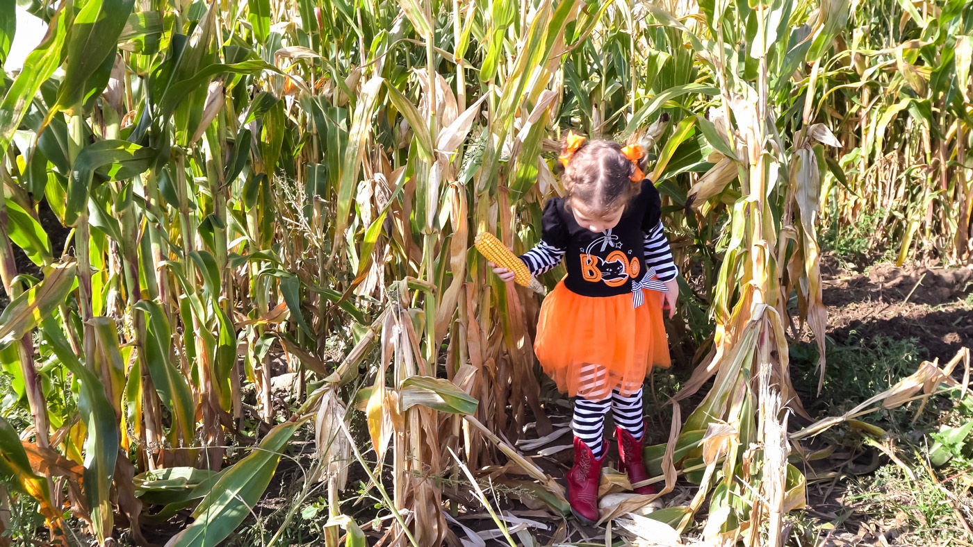 Our Saskatoon hotel offers a list of some of the best corn mazes and Halloween events for kids and adults alike