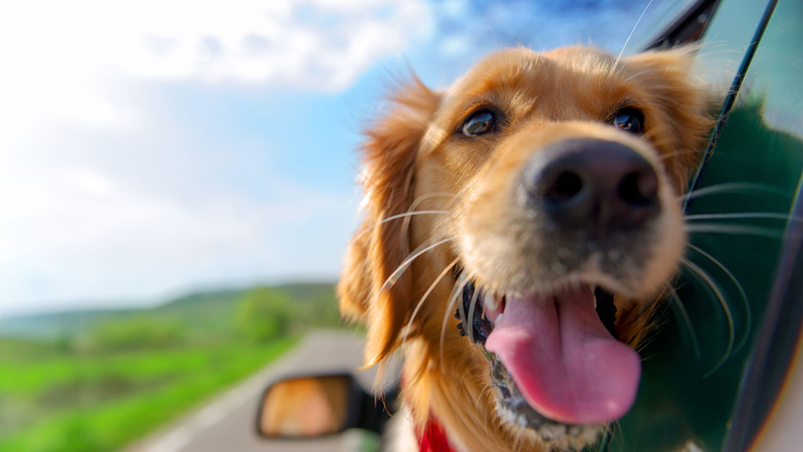 Saskatoon Pet Friendly Hotels: 4 Tips to Look After Fido's Health on the Road