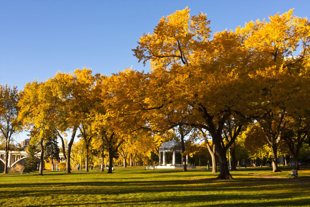 The Vimy Memorial in Kiwanis Park is one of many historical landmarks to take in from your hotel in Saskatoon.